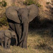 Tracking Instincts | krazywithtravel African Wild. Sabi Sand. Kruger National Park. Elephant Summit Lake, Working Blue, Spring Lake, Kruger National Park, African Safari, Narnia, Serenity, Blues, Wildlife