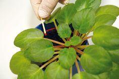 Čo potrebujú jednotlivé druhy izbových rastlín, aby sa im darilo? Herb Garden, Garden Plants, Indoor Plants, House Plants, Home And Garden, Plant Shelves, Herbs, Gardening, Fruit