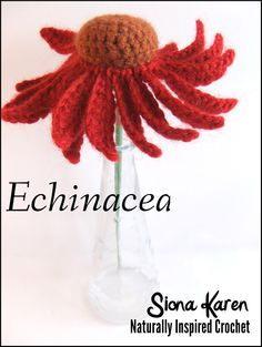 echinacea: Flower and Leaf Patterns