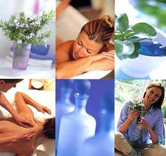 http://www.aromaessentialoilstore.com/eucalyptus-globulus-certified-organic-p-181.html