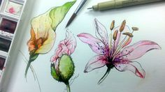 How to draw and paint Flowers with Pen and ink and watercolor as a part of learning how to draw landscape and scenery. This tutorial will be the first of a s...