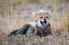 Safarious - Vulnerable - Dana Allen