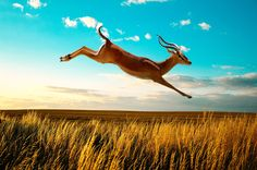 Image Blender Fusion Editing App #deer #jumping #running #grass #blue #bluesky #sky #landscape #deerphotos #androidapps #sun #photoapp #clones #fusion #New #double #coolstuff #designer #overlays #photofame #typography #montage #exposure !! https://play.google.com/store/apps/details?id=com.techbla.instafusionfree
