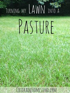 Turning our Lawn into Goat Pasture | Chickadee Homestead