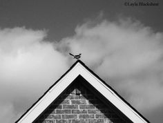 25% off with code SUMMER25 through 8/31/15 - Mockingbird  Black & White Minimalist Photograph by PictureBook #etsy #minimalist #minimalism #blackandwhite #photography #mockingbird #texas #minimal