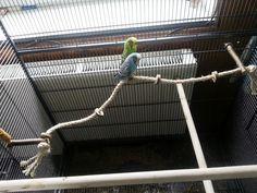 Tolles Sisal Kletterseil mit 3 Naturholz Sitzstangen und leckeren Knabberringen - ein außergewöhnliches Vogelspielzeug: Amazon.de: Haustier