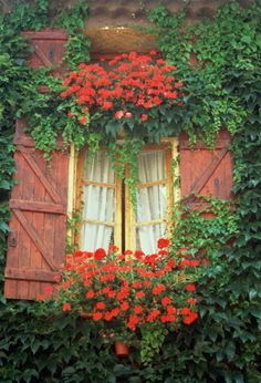 Window box above and below the window...YES!!