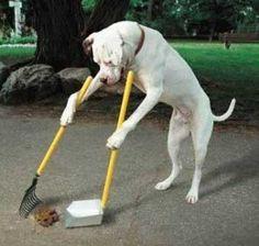 Principi di base per l'addestramento del cane