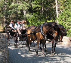 A Carriage Ride in Acadia National Park