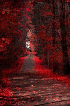 Crimson Path - New Jersey, USA