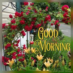 Good Morning Greetings, Good Morning Good Night, Good Morning Images, Good Morning Quotes, Start The Day, Happy Sunday, Dreadlock Hairstyles, Dil Se, Flowers