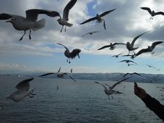 pi_istanbul