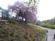 Huge flower beds flank the paths in Princes Street Gardens, Edinburgh.  Pretty when the cherry blossom is in flower. Stay nearby at Craigwell Cottage - a self-catering property in the heart of Edinburgh.  Within easy walking distance of Princes Street. More at: http://www.2edinburgh.co.uk