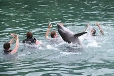 Dolphin Swim & Dunns River Falls #Falmouth #Jamaica   Someday I will do this!