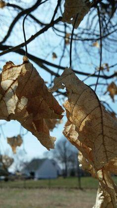 Dead leaves on tree