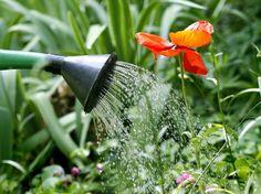 Consejos para el riego del jardín - http://www.jardineriaon.com/consejos-para-el-riego-del-jardin.html