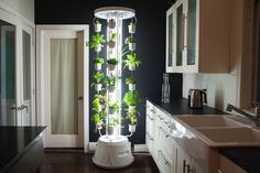Nutritower is a vertical farm for your tiny condo -- even in the kitchen!