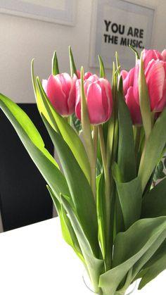 Etwas weniger perfekt, dafür umso glücklicher Wir haben gestern allesamt verschlafen, das kuschlige Bett und die Snooze-Funktion haben etwas dazu beigetragen. Heute morgen hat's gut funktioniert, wir sind on time... Plants, Today Morning, Get Up, Valentines, Bed, Flora, Plant, Planting