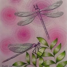 Dragonflies from Animal Kingdom