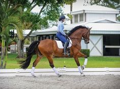 Exercises to Develop Your Horse's Straightness and Collection