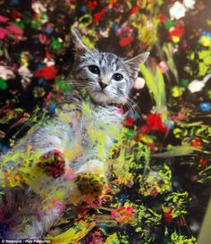 Stray cats in Australia are now being found a new loving home, all paid for with paintings that would make Picasso proud. http://www.dailymail.co.uk/news/article-2097359/Move-Damien-Hirst-Pawcasso-kittens-create-art-raise-money-abandoned-pets.html