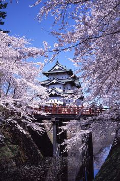 Tohoku is one of the best places to see cherry blossom in Japan with blooms just as beautiful as Kyoto but without the crowds or high prices. Photo Japon, Japan Photo, Go To Japan, Visit Japan, Aesthetic Japan, Travel Aesthetic, Japon Tokyo, Osaka Japan, Japanese Castle