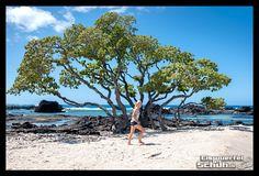 #KikauaBeachPoint #BigIsland #Hawaii { #Triathlonlife #Training #Love #Fun } { via @eiswuerfelimsch } { #beach #beachgirl #summer #sun #ocean #sommer #strand #turtle #berlinrunnersontour } { #pinyouryear } { #wallpaper } { #puma #reebok #currexsole } { www.eiswuerfelimschuh.wordpress.com }
