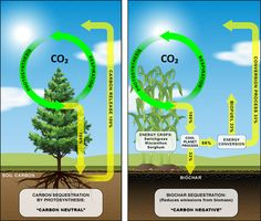 Development of extensive macro lettuce root systems onto and through biochar particles The Science of Biochar and impact on climate change. http://www.coolplanet.com/BiocharScience
