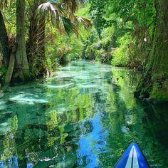 It's a beautiful world--Kayaking,Wekiva River,Florida Ecuador, Rock Springs Run, Places To Travel, Places To Visit, Florida Adventures, Florida Springs, Florida Travel, Florida Keys, Maui Vacation