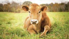 Disminuye el consumo de carne en Estados Unidos