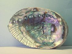 Abalone shells catch your smudging ashes, and welcome the Water element to your rituals