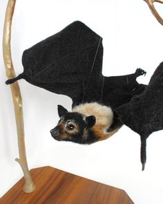 I Ve Finally Finished This Spectacled Flying Fox Bat And Am So Hy With How