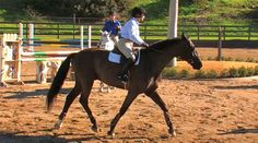 <p>Member Dawn asks how to train a horse to slow down that likes to go fast and resists slowing down when asked. Bernie shares his advice on how he used to tackle this common issue with the TB's he used to ride and train. </p>