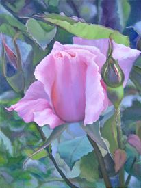 Marilyn Rothman's photo realism paintings of flowers --the pink rose