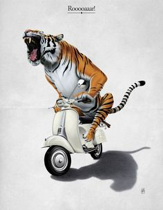 scooter tiger