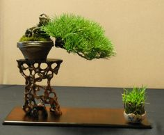 Image from https://bonsaieejit.files.wordpress.com/2013/03/221641_472893892765253_87021571_n.jpg.