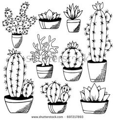 Cactus and succulents set Isolated on white background. Hand drawn plants in flower pots. Monochrome echeveria, rosula, aloe vera. Design for book, magazine, web, card. Vector illustration