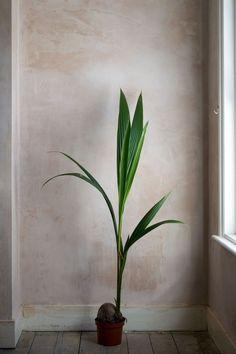 Cool Plants, Green Plants, Tropical Plants, Leafy Plants, Patio Interior, Nordic Interior, Decoration Plante, Decoration Table, Indoor Garden