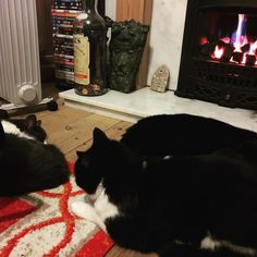 In the cold of night all differences are set aside in front of the paralysing liquifying presence of a fire. #catsofinstagram #cats #pets #petstagram #petsofinstagram