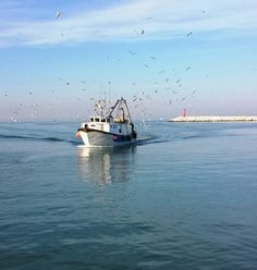 pesce in arrivo, fish is arriving