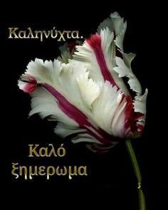 Good Night, Beautiful Flowers, Nighty Night, Good Night Wishes