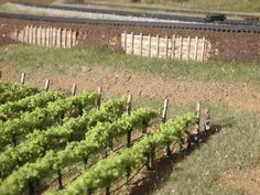 How to Plant an N-scale Vineyard   Model Railroad Hobbyist magazine   Having fun with model trains   Instant access to model railway resources without barriers