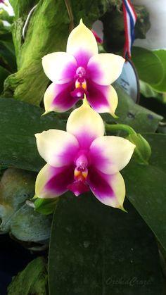 Amazing Orchid!