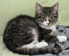 Bumpkin is Adopted!