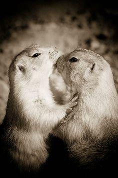 Hugs And Kisses by Tawnya Apuan