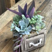 can't get enough of succulents in drawers. Why is that? can't get enough of succulents in drawers. Why is that? The post can't get enough of succulents in drawers. Why is that? appeared first on Garden Diy. Succulents In Containers, Cacti And Succulents, Planting Succulents, Cactus Plants, Planting Flowers, Indoor Cactus, Cactus Art, Succulent Landscaping, Succulent Gardening