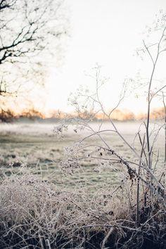 Winter Szenen, Winter Magic, Winter Time, Winter Christmas, Snow Scenes, Foto Art, Winter Garden, Mists, Landscape Photography