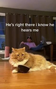 Funny Cute Cats, Cute Funny Animals, Cute Animal Videos, Funny Animal Pictures, I Love Cats, Crazy Cats, Gato Gif, Cute Little Animals, Cool Pets
