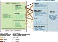 Ecosystem services and constituents of well-being