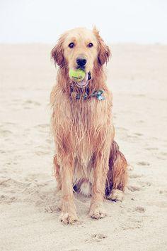 Cape Cod Beach Dog.    http://www.andreaspencephotography.com